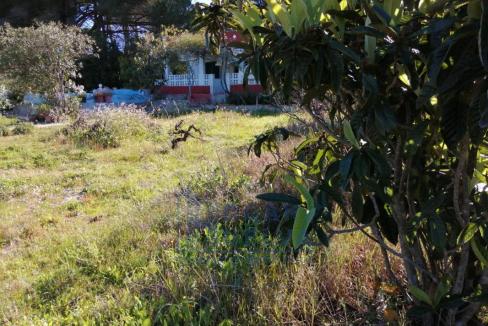 Campo lucena 2